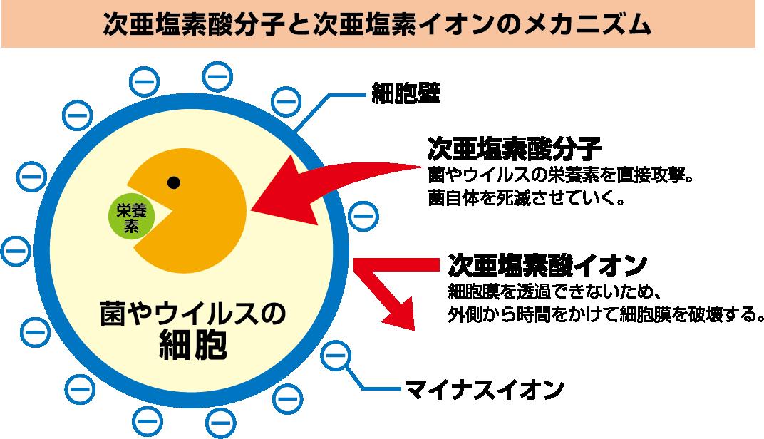 ウィルス分解メカニズム、次亜塩素酸水